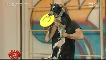 Disc Dog on TV (Rai2)